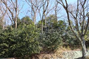 大竹が眠る地