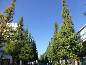 千駄ヶ谷の通り