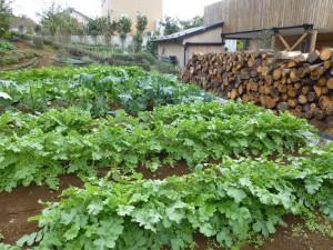 新井さん農園