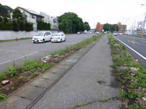 街路樹伐採
